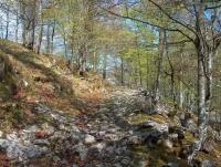 Hayedo de la Zamina en San Roque Riomiera